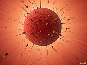 Оплодотворение яйцеклетки - как это происходит