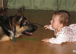 Грудной ребенок и животные
